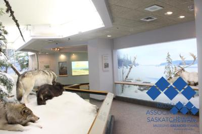 Royal Saskatchewan Museum- Interior #3